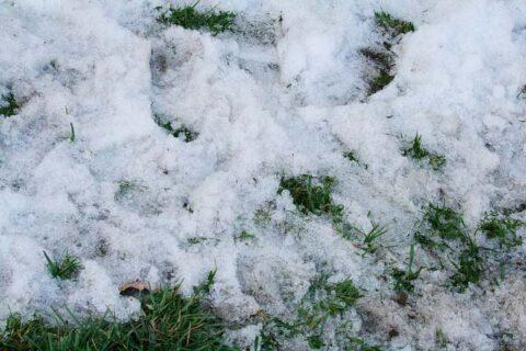 Snow on Grass