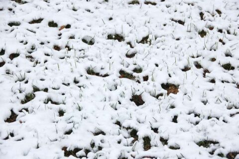 Ice on ground