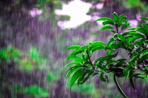 bright environment flora